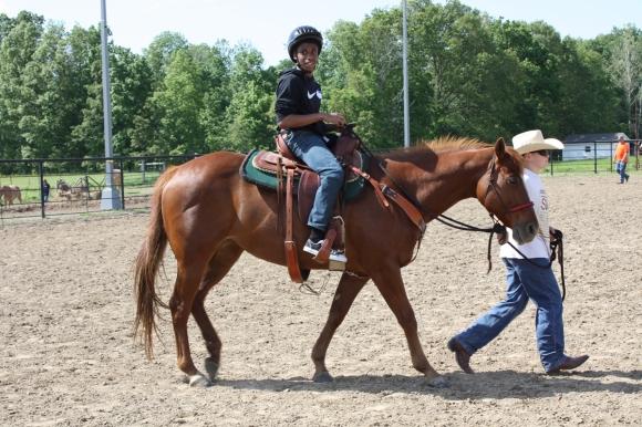 Horses_tease box