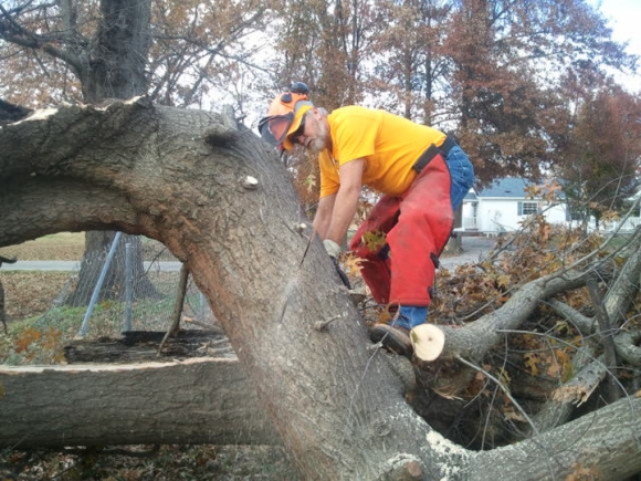 A Disaster Relief volunteer in southern Illinois takes care of a felled tree in southern Illinois.
