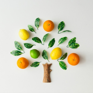 Tree made of citrus fruits, oranges, lemons, lime and green leav